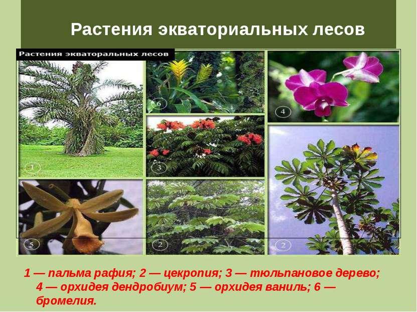 доме Успей презентация растения экваториального леса Фет Афанасий Афанасьевич