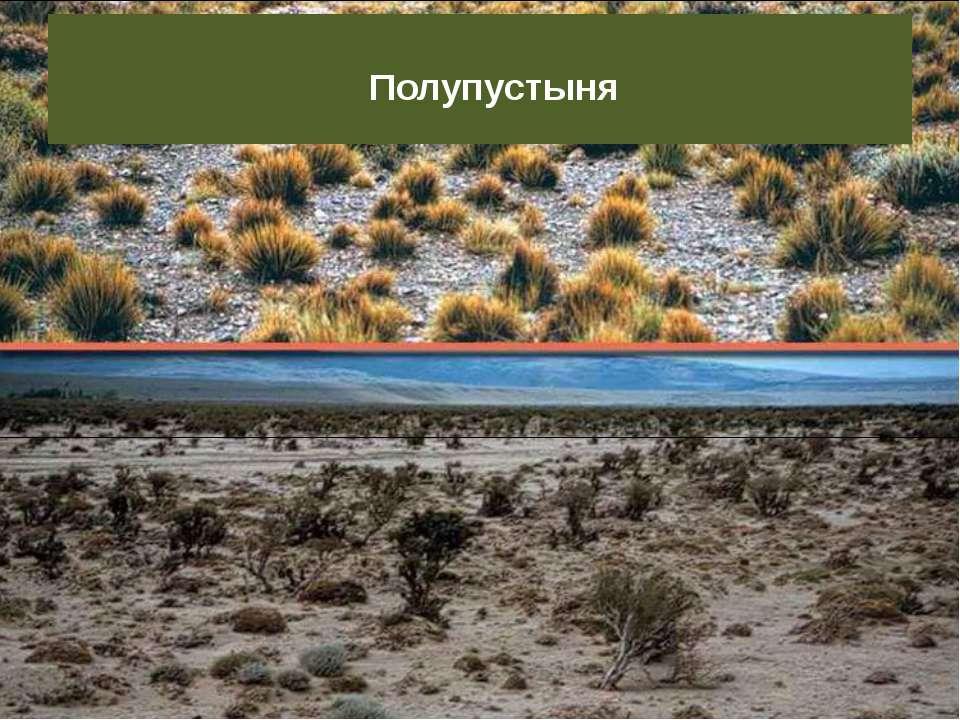 Полупустыня