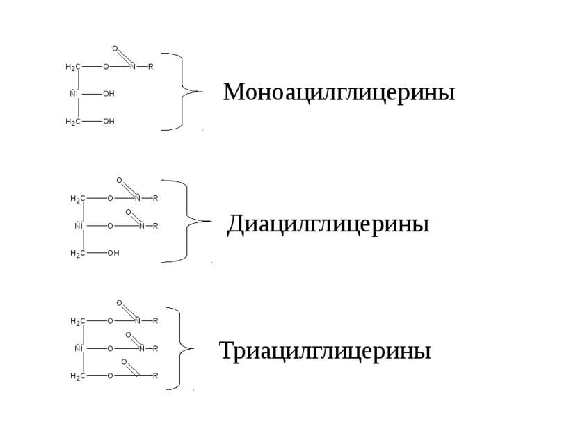 Триацилглицерины Диацилглицерины Моноацилглицерины