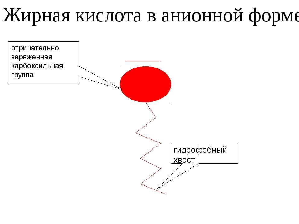 отрицательно заряженная карбоксильная группа Жирная кислота в анионной форме ...