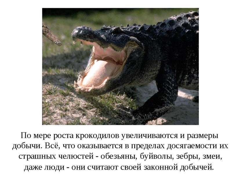 По мере роста крокодилов увеличиваются и размеры добычи. Всё, что оказывается...