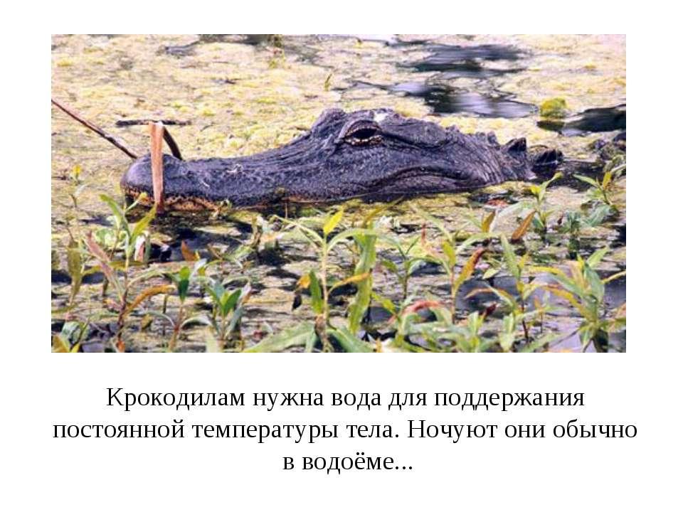 Крокодилам нужна вода для поддержания постоянной температуры тела. Ночуют они...