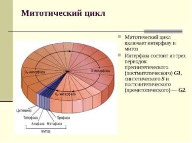 Митотический цикл Митотический цикл включает интерфазу и митоз Интерфаза сост...