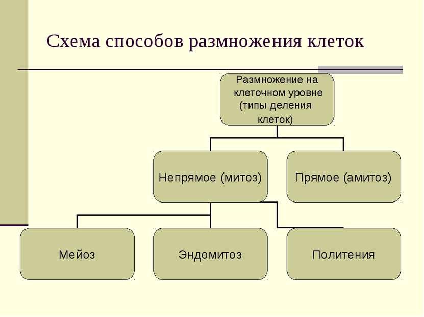 Схема способов размножения клеток