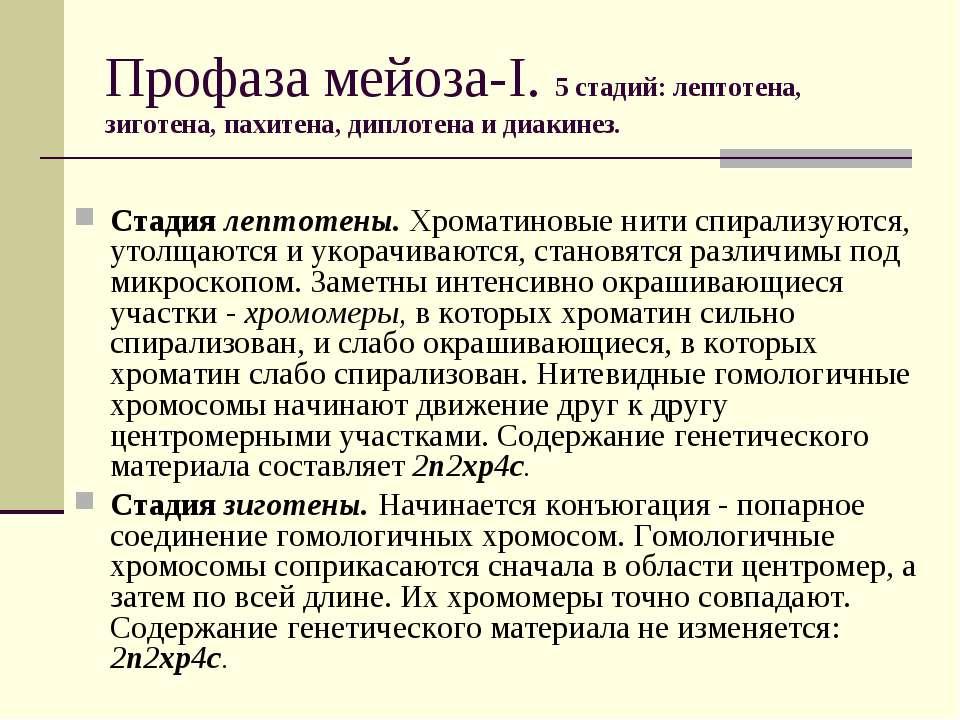 Профаза мейоза-I. 5 стадий: лептотена, зиготена, пахитена, диплотена и диакин...