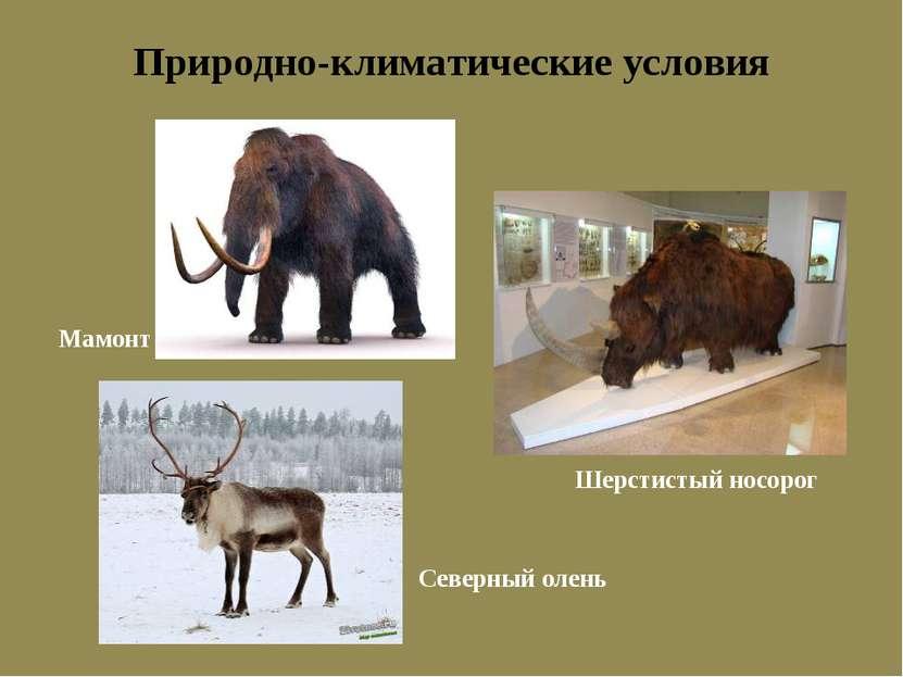 Природно-климатические условия Шерстистый носорог Мамонт Северный олень