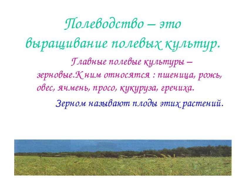 Полеводство – это выращивание полевых культур. Главные полевые культуры – зер...