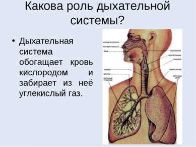 Какова роль дыхательной системы? Дыхательная система обогащает кровь кислород...