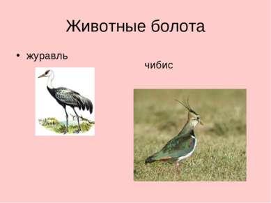 Животные болота журавль чибис