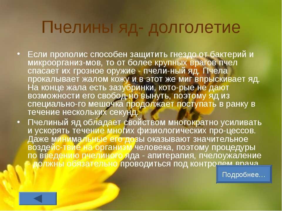 Пчелины яд- долголетие Если прополис способен защитить гнездо от бактерий и м...