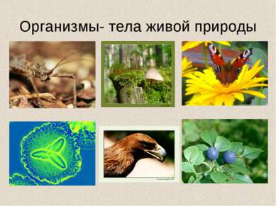 Организмы- тела живой природы