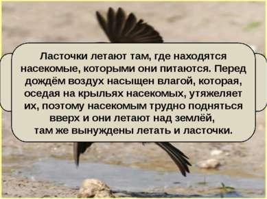 Ласточки летают над самой землёй – будет дождь. Всем известна эта народная пр...