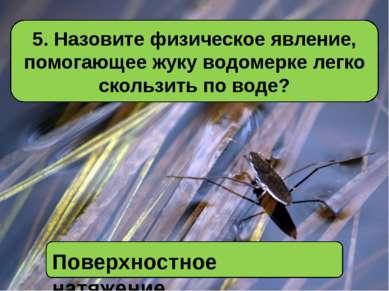 5. Назовите физическое явление, помогающее жуку водомерке легко скользить по ...