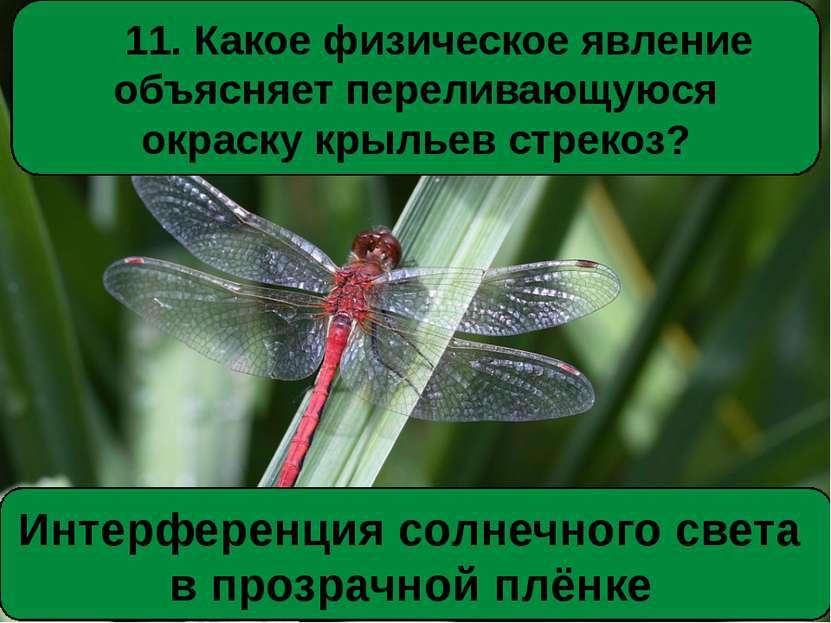 11. Какое физическое явление объясняет переливающуюся окраску крыльев стрекоз...