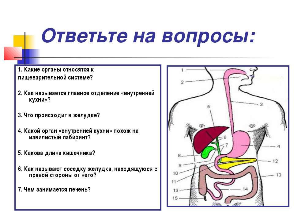 Ответьте на вопросы: 1. Какие органы относятся к пищеварительной системе? 2. ...