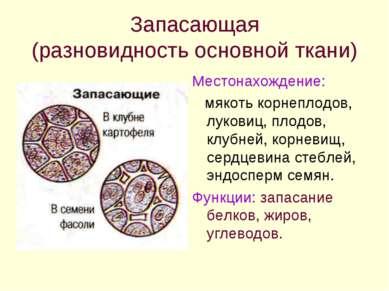 Запасающая (разновидность основной ткани) Местонахождение: мякоть корнеплодов...