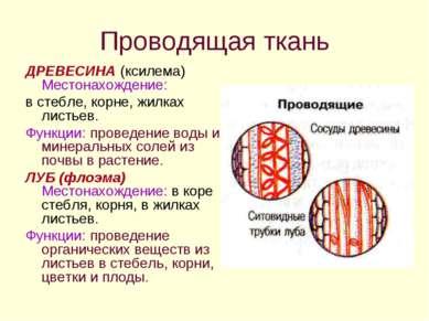 Проводящая ткань ДРЕВЕСИНА (ксилема) Местонахождение: в стебле, корне, жилках...