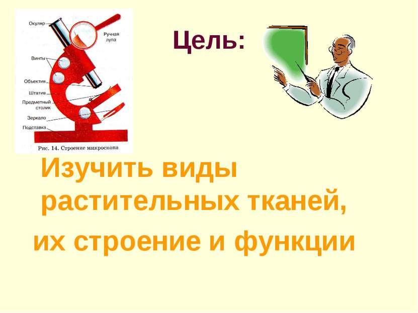 Цель: Изучить виды растительных тканей, их строение и функции