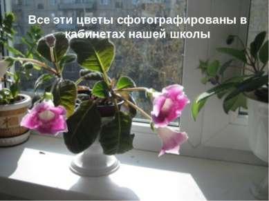 Все эти цветы сфотографированы в кабинетах нашей школы