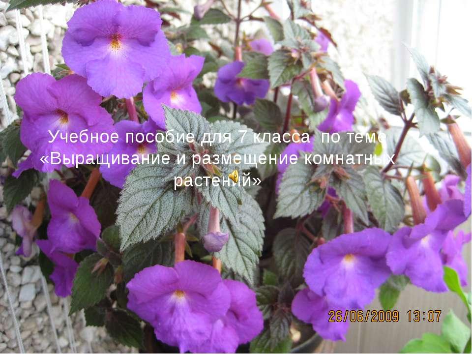 Учебное пособие для 7 класса по теме «Выращивание и размещение комнатных раст...