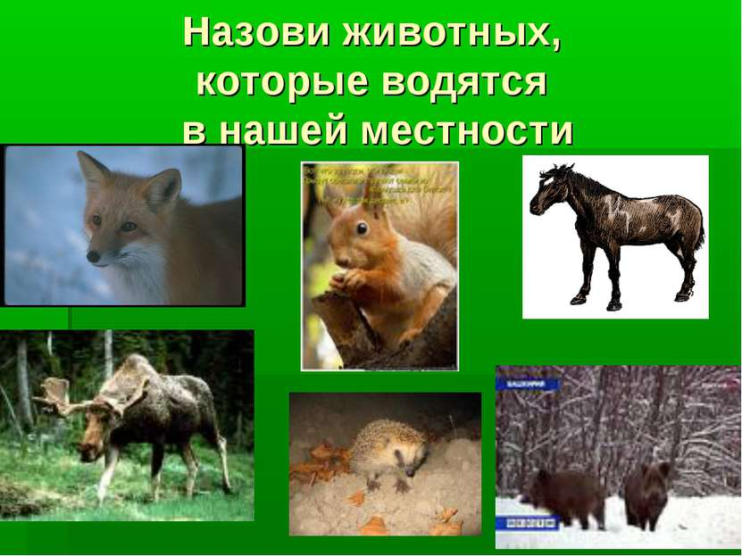 Назови животных, которые водятся в нашей местности