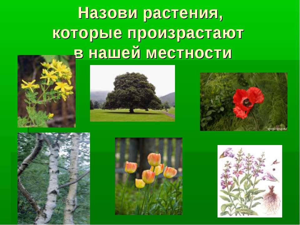 Назови растения, которые произрастают в нашей местности