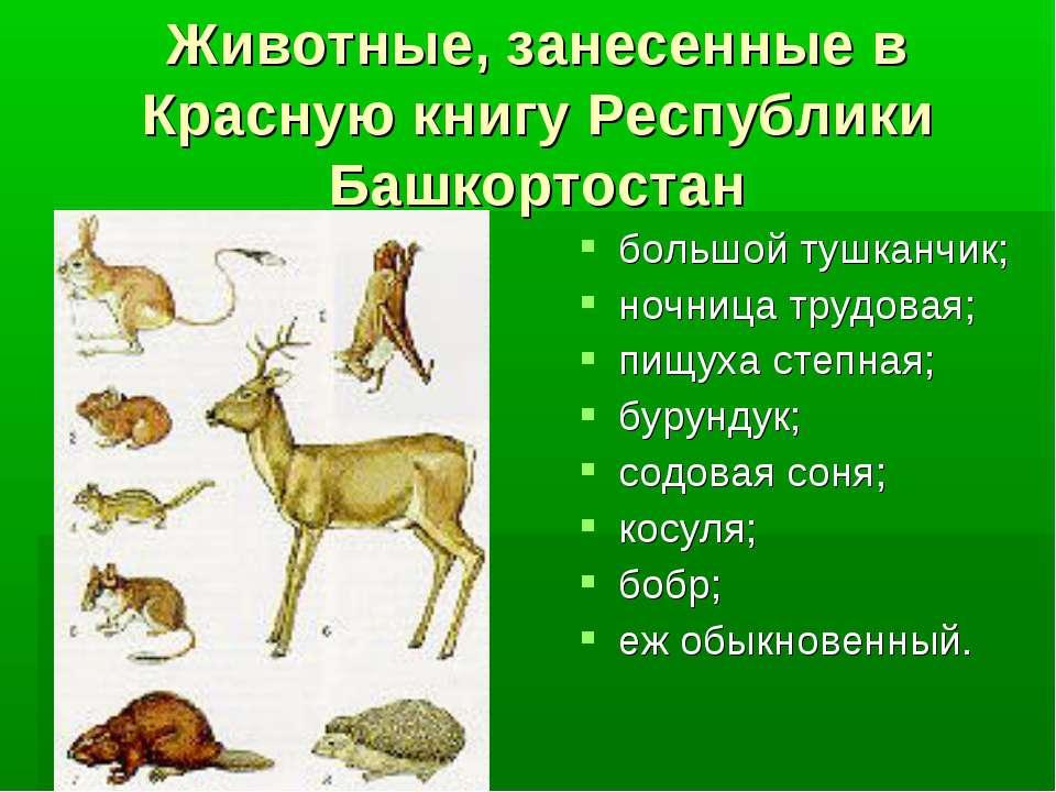 Животные, занесенные в Красную книгу Республики Башкортостан большой тушканчи...