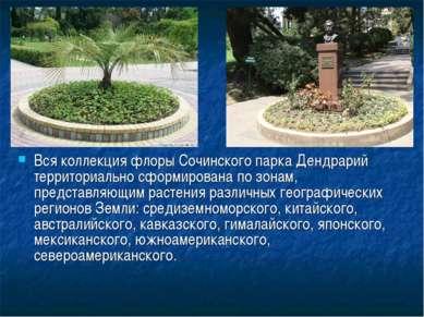 Вся коллекция флоры Сочинского парка Дендрарий территориально сформирована по...