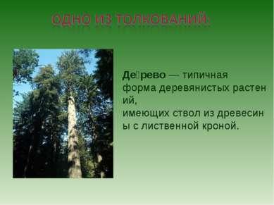 Де рево—типичная формадеревянистыхрастений, имеющихстволиздревесины с ...