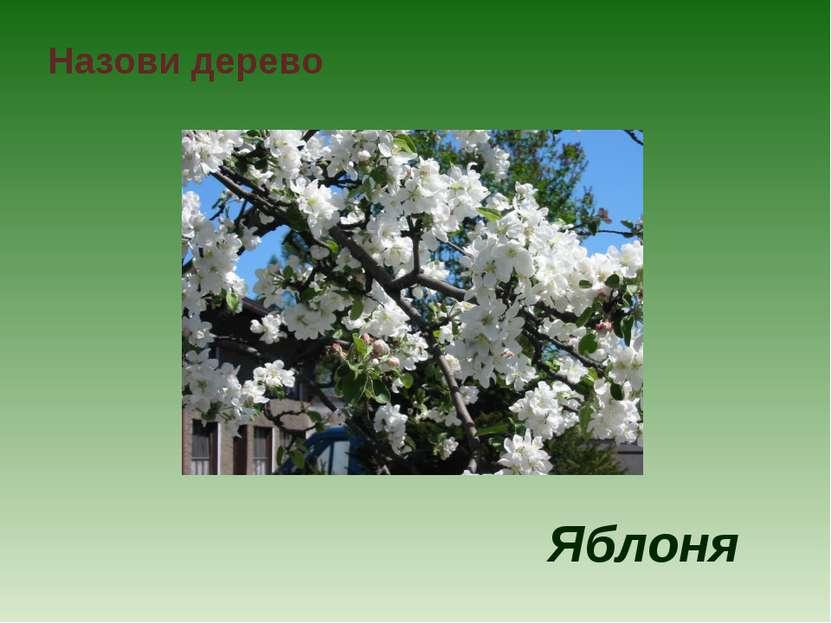 Назови дерево Яблоня