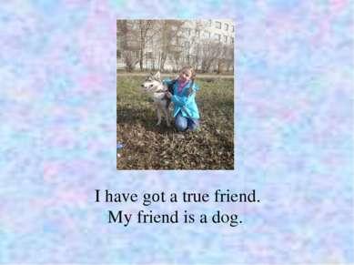 I have gоt a true friend. My friend is a dog.