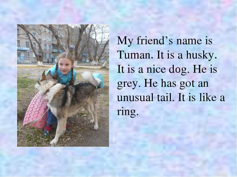 My friend's name is Tuman. It is a husky. It is a nice dоg. He is grey. He ha...
