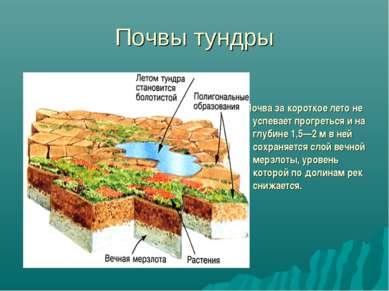 Почвы тундры Почва за короткое лето не успевает прогреться и на глубине 1,5—2...