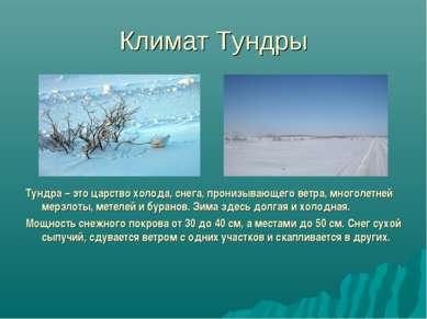 Климат Тундры Тундра – это царство холода, снега, пронизывающего ветра, много...
