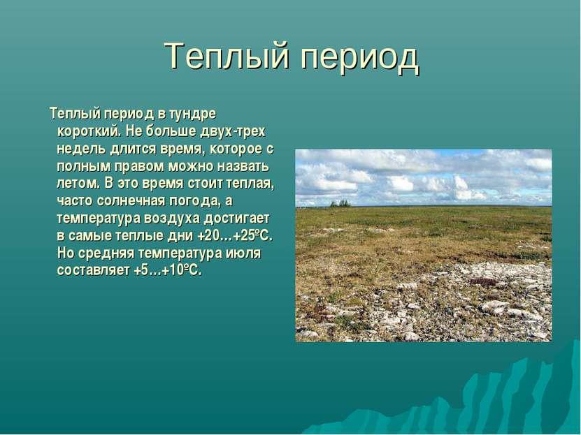 Теплый период Теплый период в тундре короткий. Не больше двух-трех недель дли...