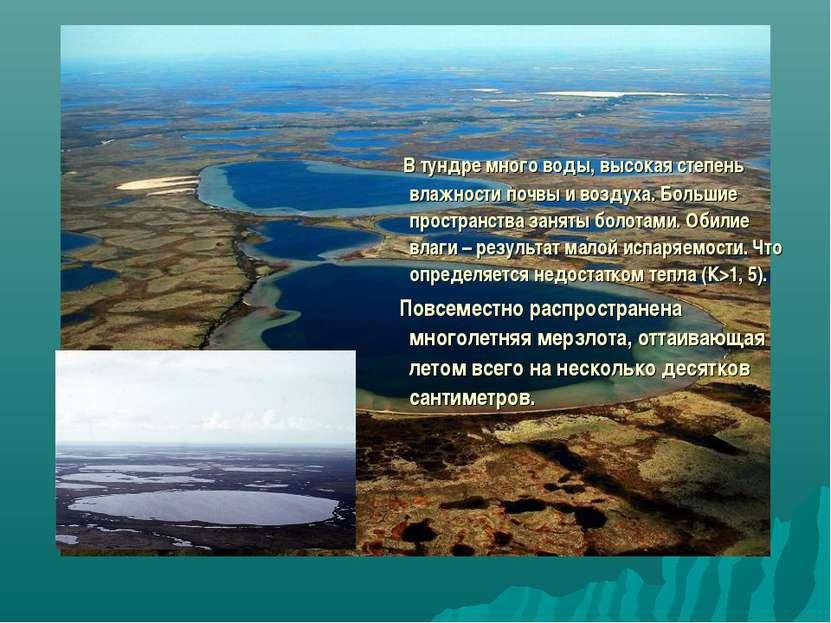 В тундре много воды, высокая степень влажности почвы и воздуха. Большие прост...