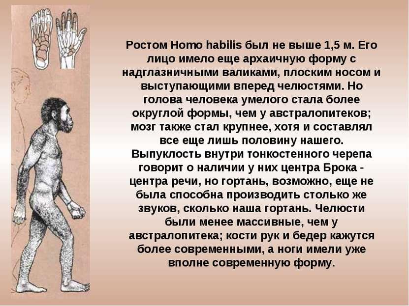 Ростом Homo habilis был не выше 1,5 м. Его лицо имело еще архаичную форму с н...