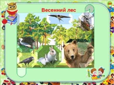 corowina.ucoz.com Весенний лес