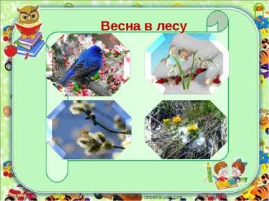 corowina.ucoz.com Весна в лесу