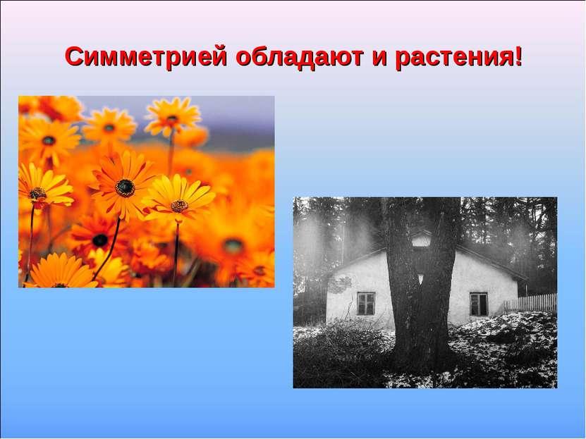 Симметрией обладают и растения!