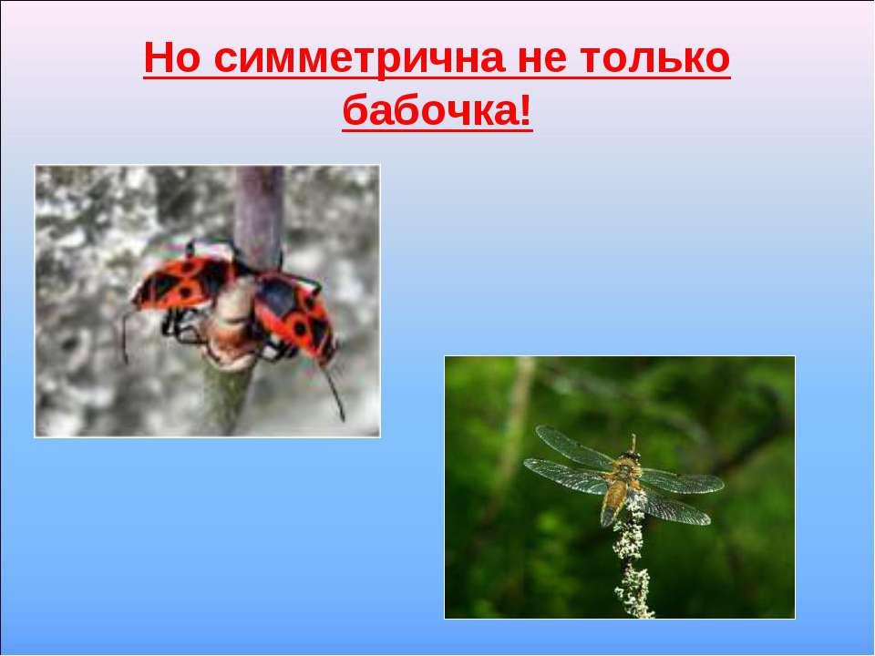 Но симметрична не только бабочка!