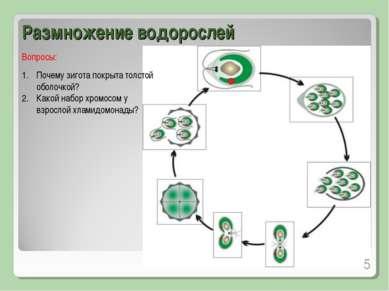 Размножение водорослей Почему зигота покрыта толстой оболочкой? Какой набор х...