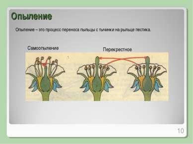 Опыление Опыление – это процесс переноса пыльцы с тычинки на рыльце пестика. ...