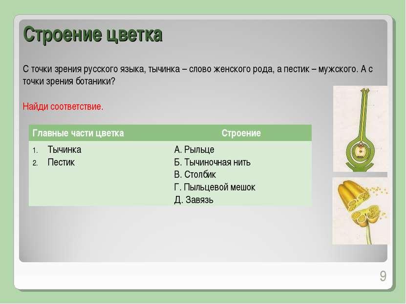 С точки зрения русского языка, тычинка – слово женского рода, а пестик – мужс...