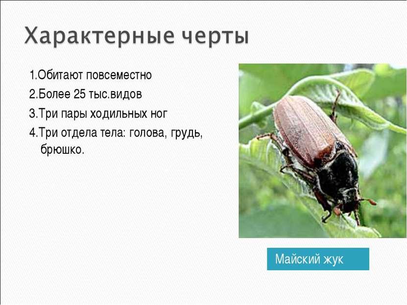 Майский жук 1.Обитают повсеместно 2.Более 25 тыс.видов 3.Три пары ходильных н...