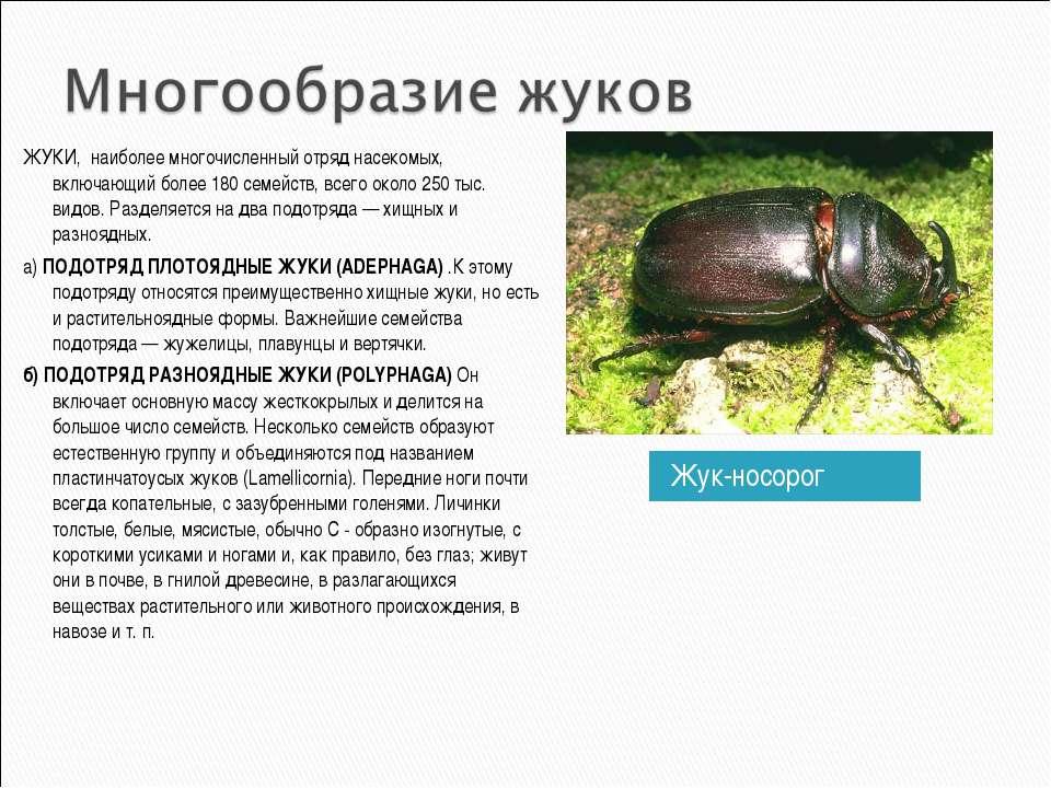 Жук-носорог ЖУКИ, наиболее многочисленный отряд насекомых, включающий более 1...