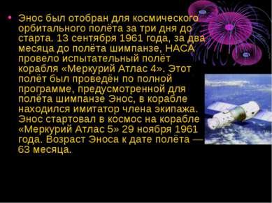 Энос был отобран для космического орбитального полёта за три дня до старта. 1...