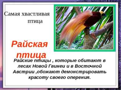 Райские птицы , которые обитают в лесах Новой Гвинеи и в Восточной Австрии ,о...
