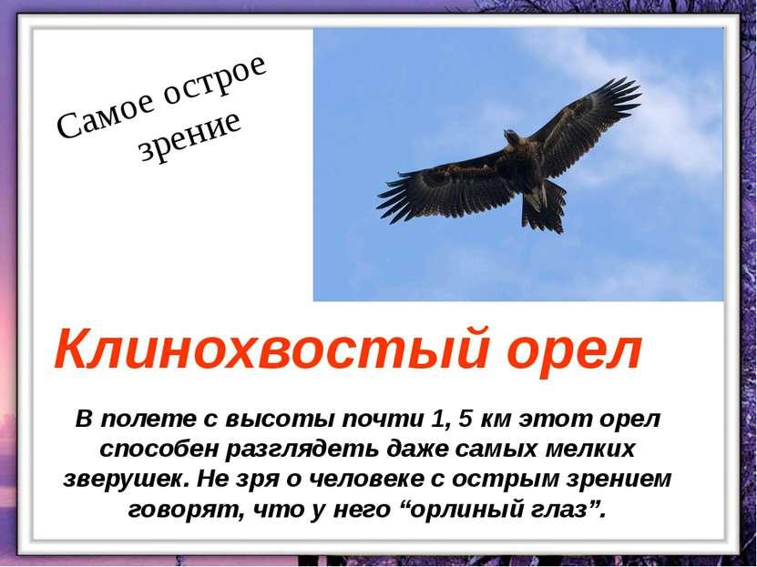 В полете с высоты почти 1, 5 км этот орел способен разглядеть даже самых мелк...