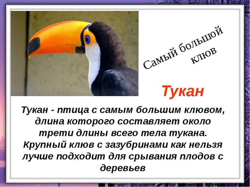 Тукан - птица с самым большим клювом, длина которого составляет около трети д...
